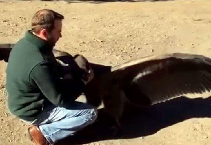 El condor argentino que le gusta abrazar