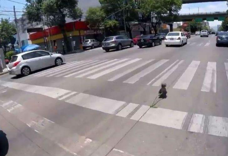 El rescate heroico de un perro se volvió viral