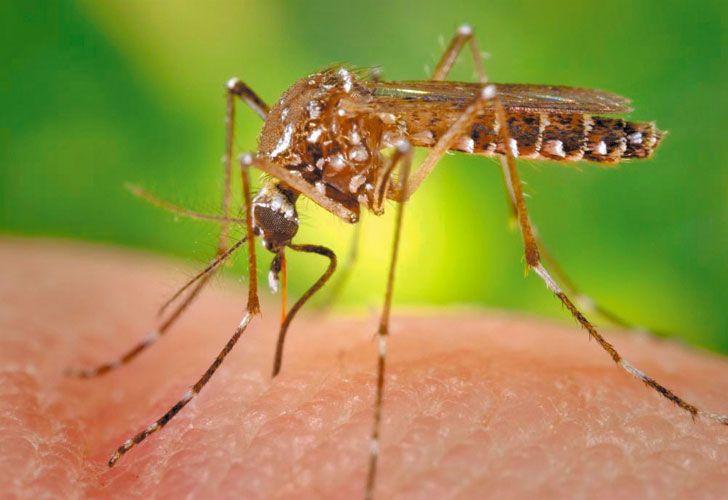 Pinchazo. No reemplaza la lucha contra el mosquito.