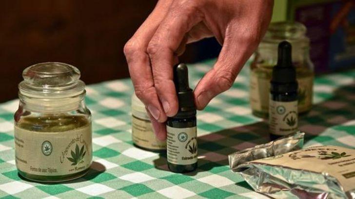 Cordobeses buscan fundar el primer clúster del cannabis medicinal.