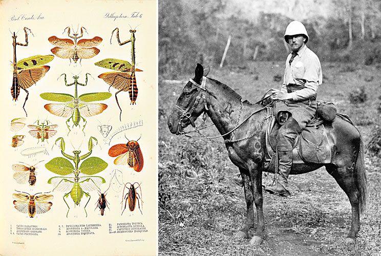 Pamuk. El arqueólogo, al lado, páginas de Biologia Centrali-Americana.