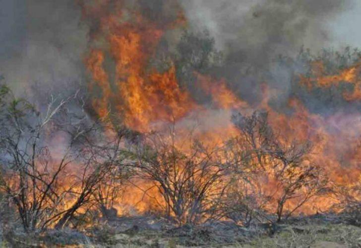 Los incendios forestales en La Pampa y Mendoza ya arrasaron con más de 230 mil hectáreas.