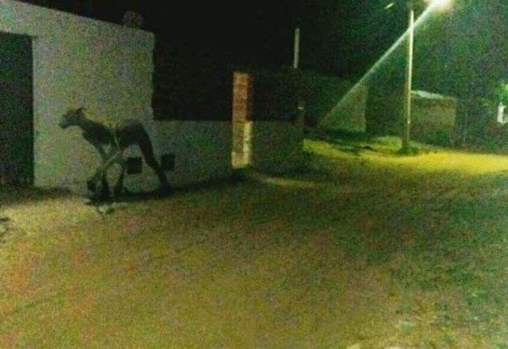Pánico por extraña criatura que asesinó a dos perros en Santa Fe