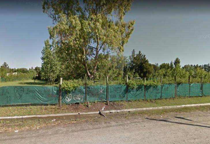 Pánico en La Plata y Berazategui por denuncias de un león suelto