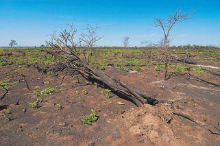 """""""El 30% de la superficie de los suelos del país está degradado"""""""