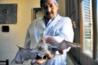 Alerta por murciélagos con rabia: piden vacunar mascotas