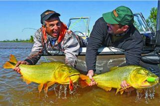 Luego de las inundaciones, dónde están los grandes dorados del Paraná Medio