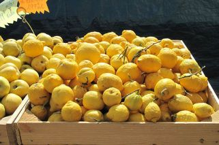 Macri to celebrate return of lemon exports to US market following 17-year absence
