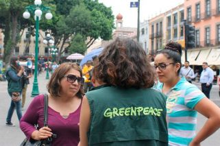 Greenpeace Argentina boss accused of sexual harassment