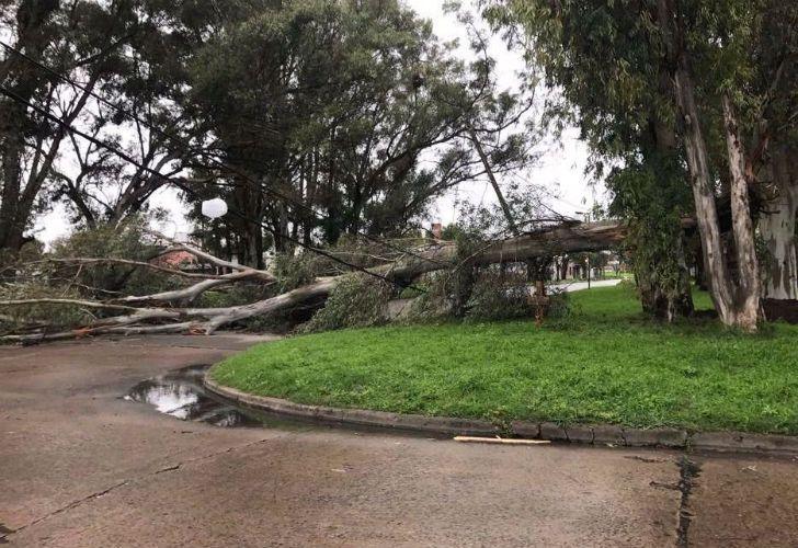 Caída de árboles en La Plata.