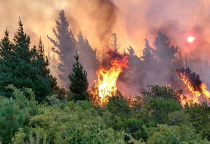 Chubut's forests threatened by wildfires.