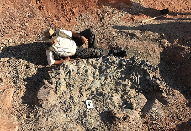 Handout photo released by the Institute and Museum of Natural Sciences (IMCN) of San Juan University, shows researcher Ricardo Martínez sitting next to a 220-million-year-old fossil at the Ischigualasto National Park on April 8, 2019.