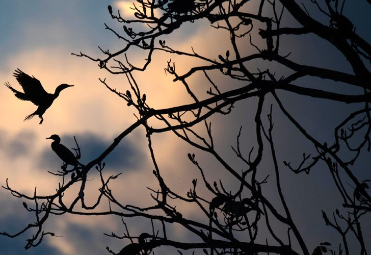 In this file picture taken on June 27, 2018 birds are seen on a tree partially submerged in water during sunset at the Mamiraua Sustainable Development Reserve in Amazonas State, Brazil. Brazil is home to more than half of the world's plant and animal species, but its ecological paradises are facing growing threats from big business and criminal outfits who have found a champion in far-right President Jair Bolsonaro, experts say.